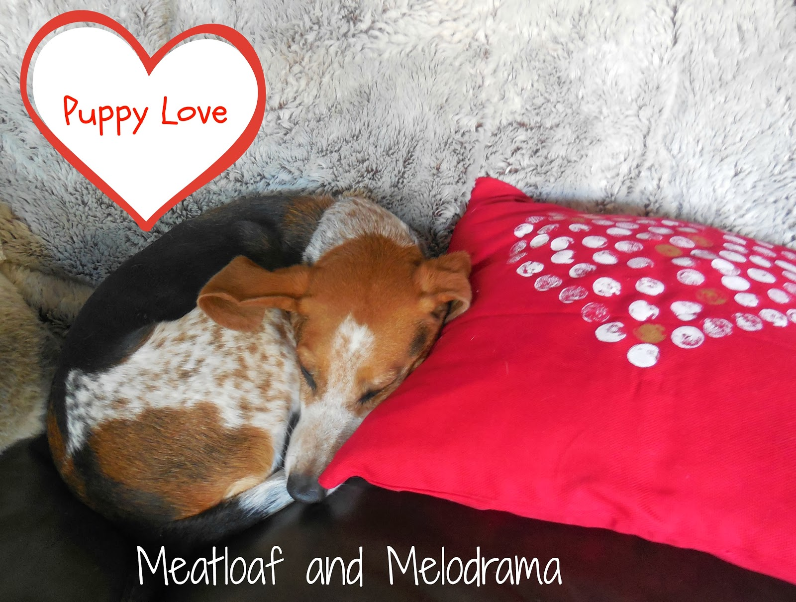 dog with heart pillow, puppy love
