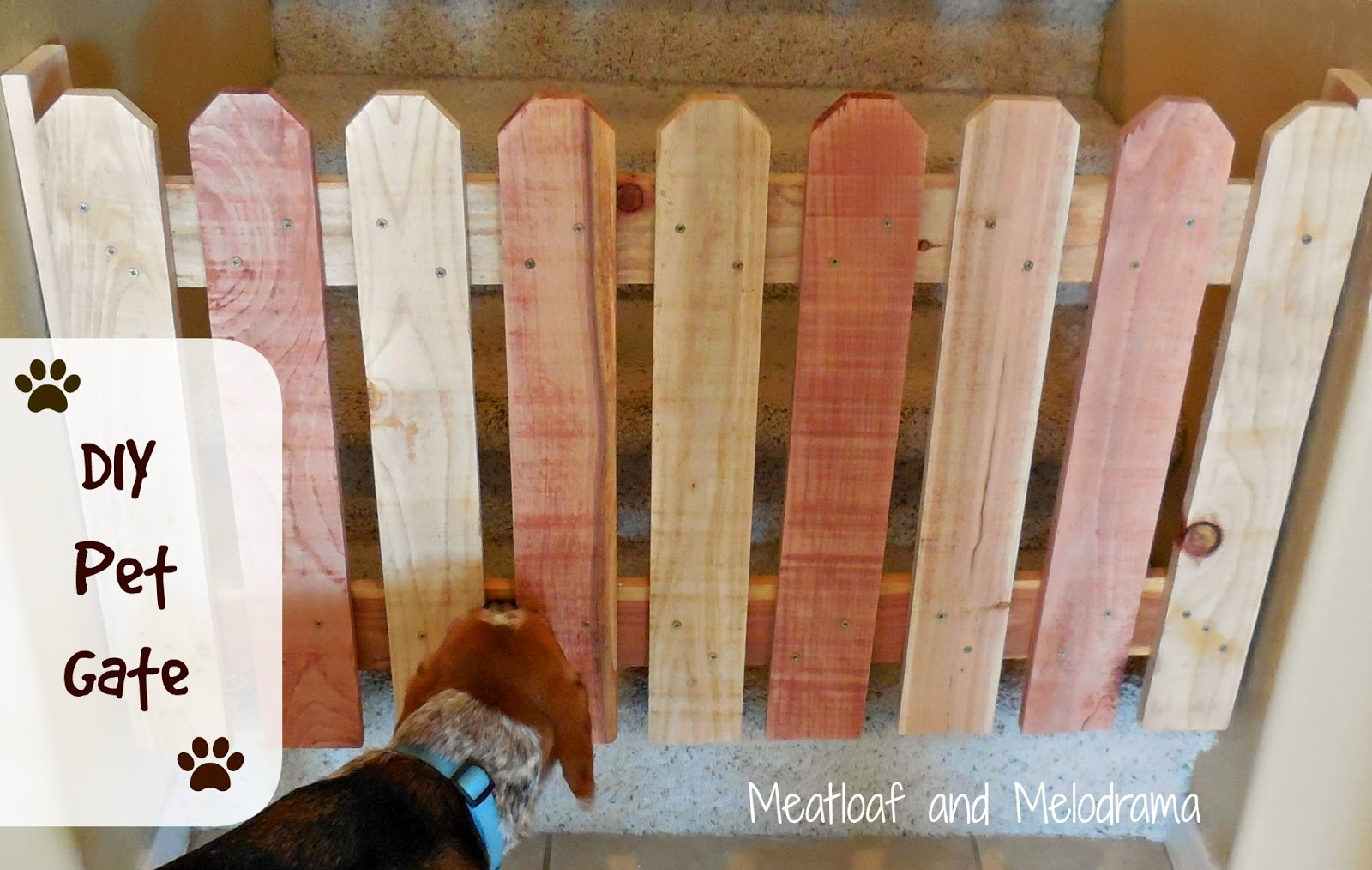 dog by wooden doggy gate