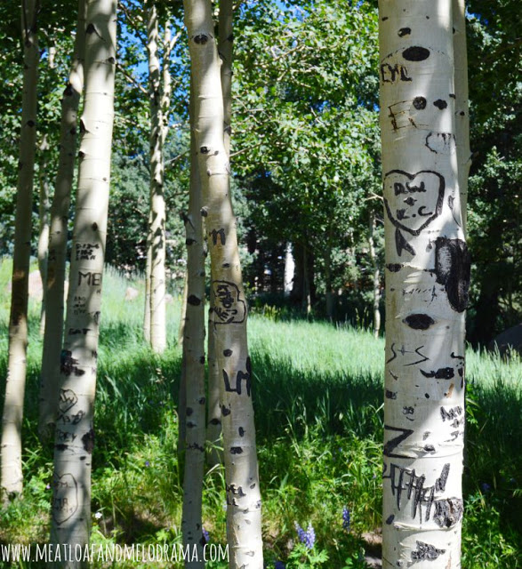 aspens in flagstaff