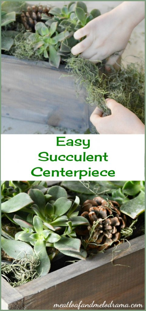 easy-succulent-centerpiece-collage