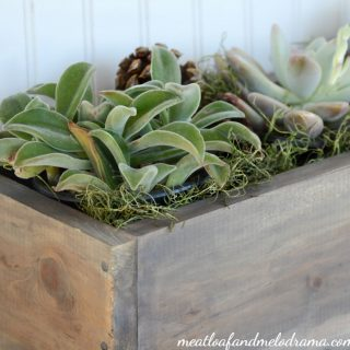 how-to-make-easy-succulent-centerpiece