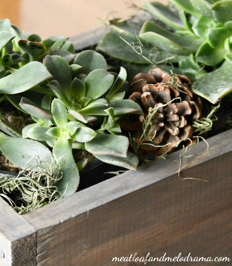 pinecones-and-succulents-planter