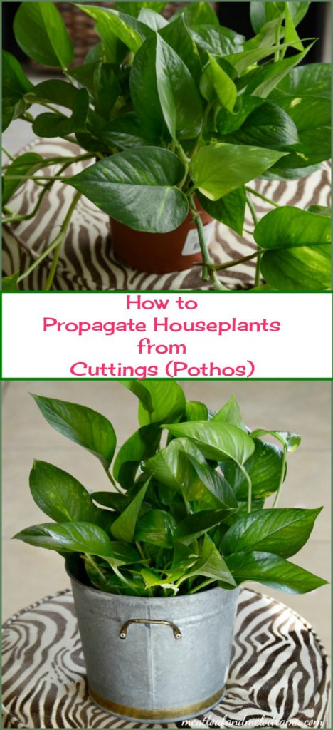 how-to-propagate-houseplants-from-cuttings